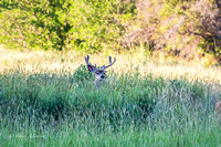 Early Morning Buck Social Gathering-3
