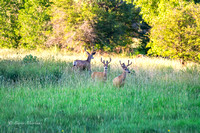 Early Morning Buck Social Gathering-4