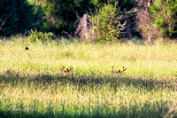 Early Morning Buck Social Gathering-5
