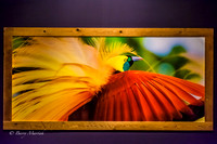Bird of Paradise Wall Graphic-1